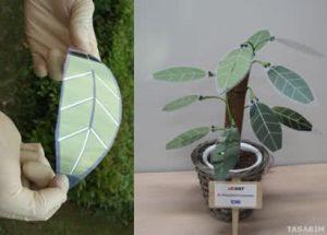 güneş paneli bitki